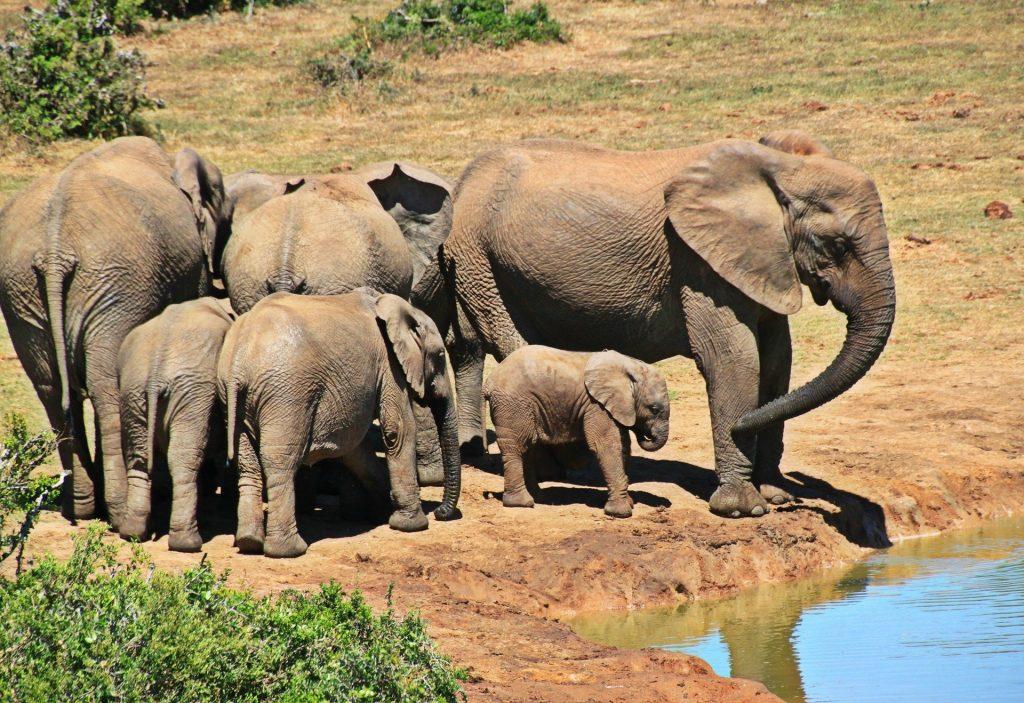 Elefantes Pixabay - Seguir Viajando Agencia de Viajes