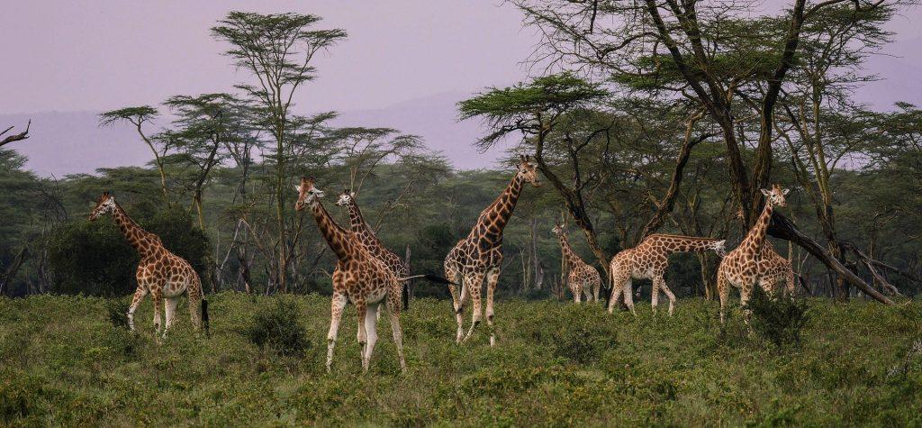 Kenia Parques Pixabay - Seguir Viajando Agencia de Viajes