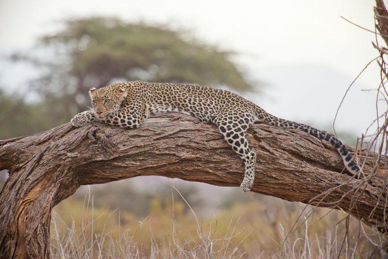 Kenia Safari Pixabay - Seguir Viajando Agencia de Viajes